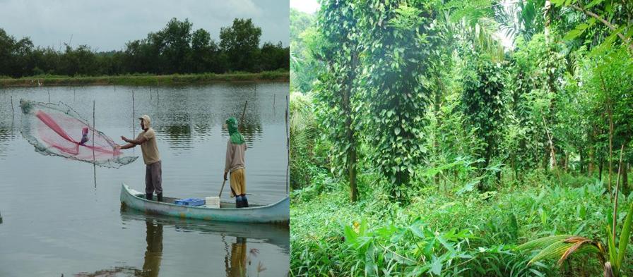 Webinar: Organic agriculture & aquaculture certification and Market